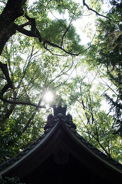 須佐之男神社拝殿屋根と森