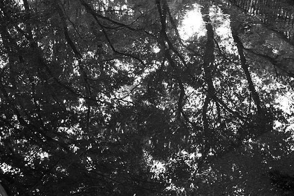 水面の木々