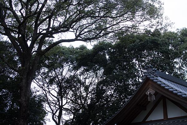 八剱神社鎮守の森