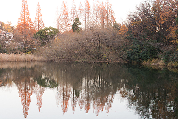 茶屋ヶ坂公園池