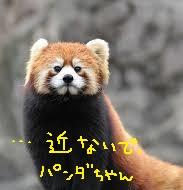 yjimage2_20161206160656a89.jpg