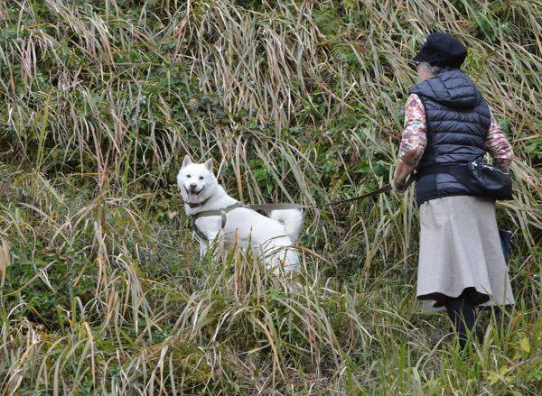 山崎中央公園で201612月