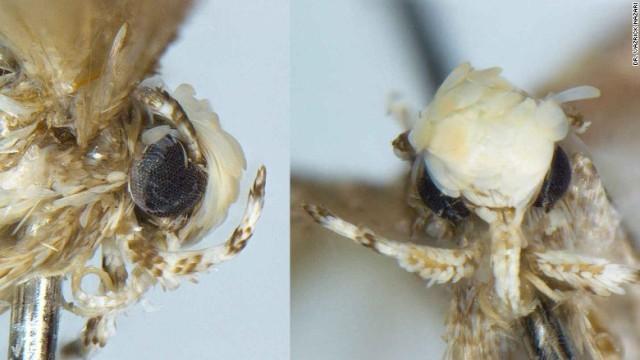 donald-trump-moth.jpg