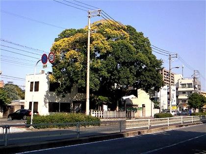 matsumushizukaNEC_0748.jpg