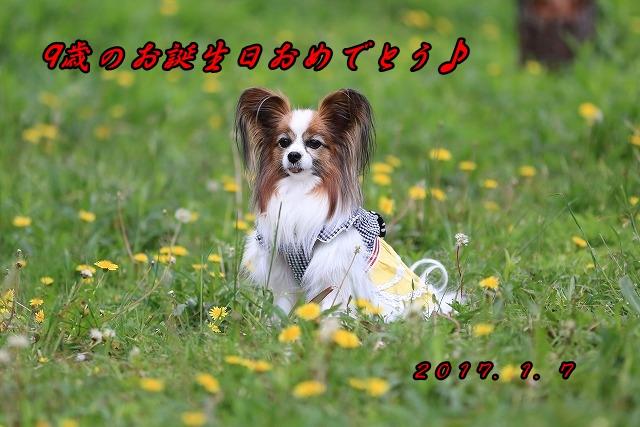 1F5A2528a_bd.jpg
