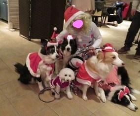 一足早い軽井沢のクリスマス  ワンコ編