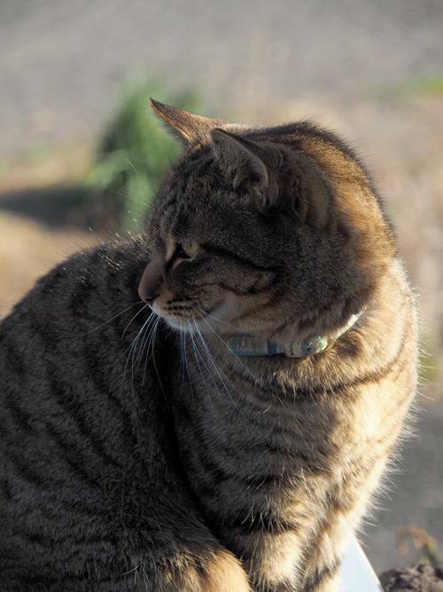 cat668 (2)