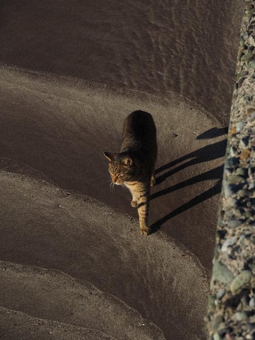 cat668 (3)