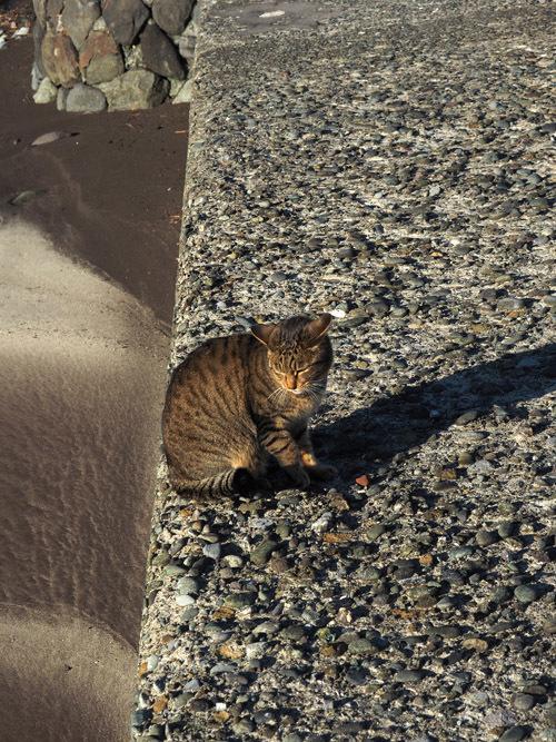 cat668 (5)