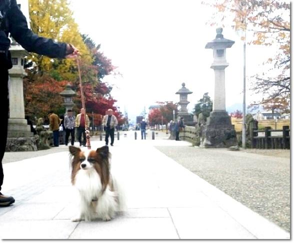 上杉神社で5