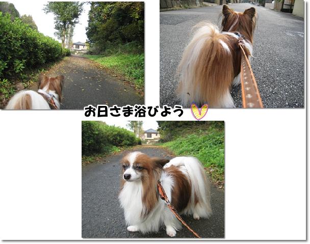 11月20日の昼散歩♪