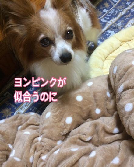 fc2blog_20161101205331993.jpg