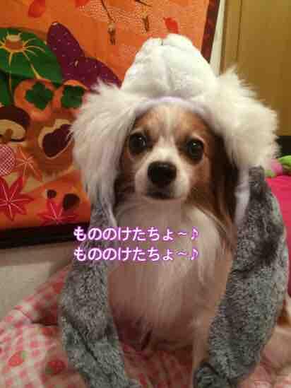 fc2blog_2016111320323897b.jpg
