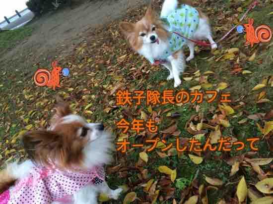 fc2blog_201611142105448bf.jpg