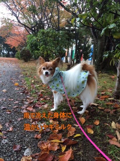 fc2blog_20161114210717302.jpg