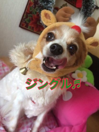 fc2blog_20161224175608bf5.jpg