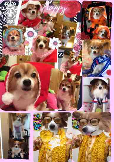 fc2blog_20161231182844601.jpg