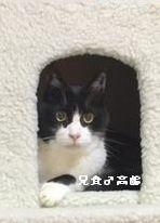 兄貴 高齢猫