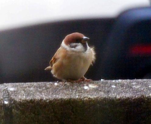 撮れた1-2羽毛が乱れるよ