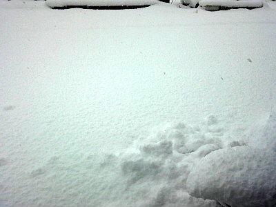 雪2017