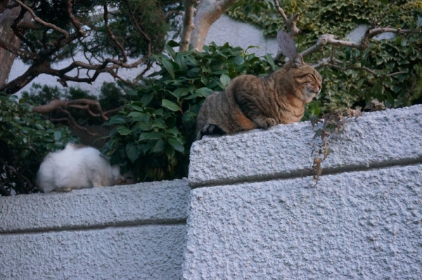 DSC07076にぃにぃ&マルオ塀の上