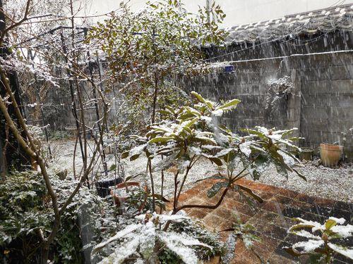 17_02_10雪の庭