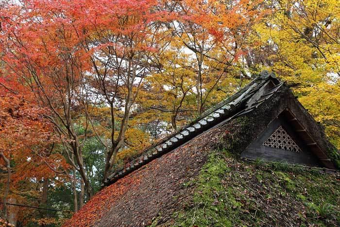 水谷茶屋 紅葉