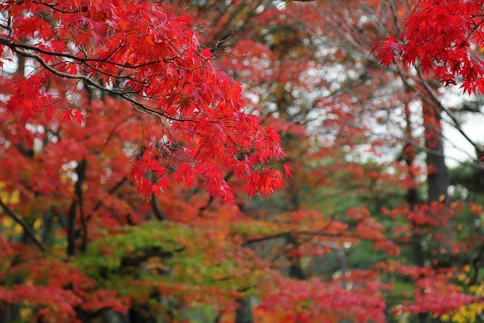 文化会館前庭 紅葉