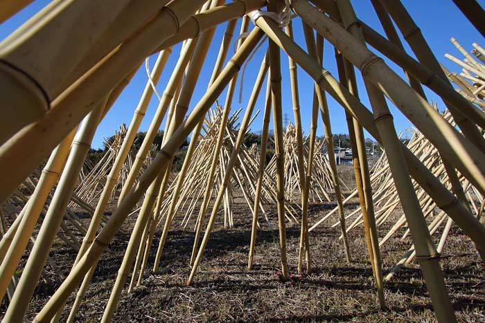高山 竹の寒干し2