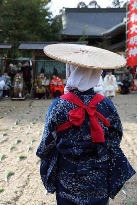 大和神社 御田植祭6