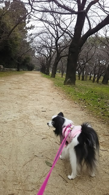 27日公園