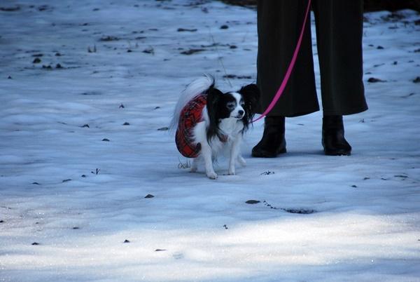 雪の上をお散歩1