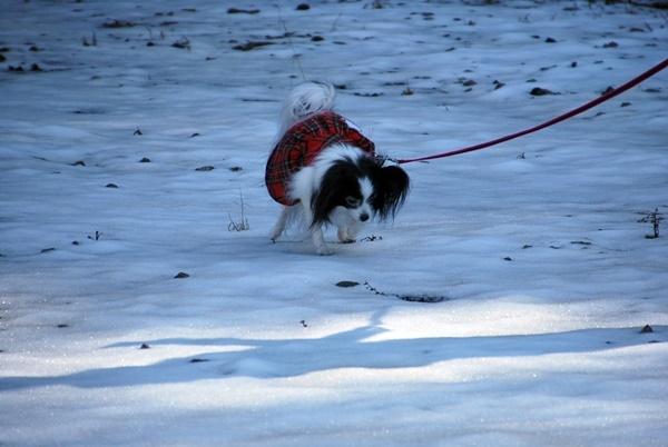 雪の上をお散歩2
