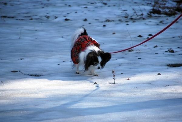 雪の上をお散歩3