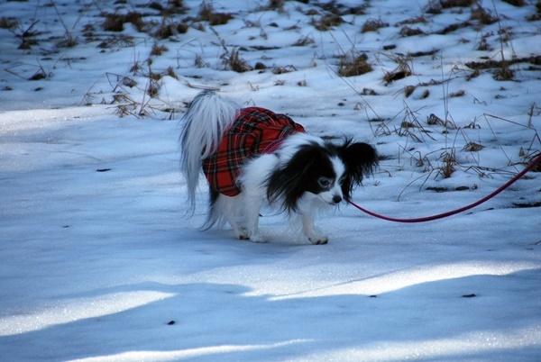 雪の上をお散歩4