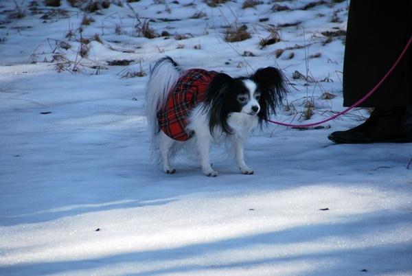 雪の上をお散歩5
