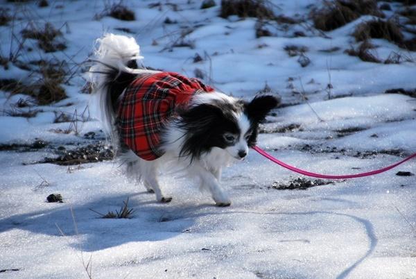 雪の上をお散歩6
