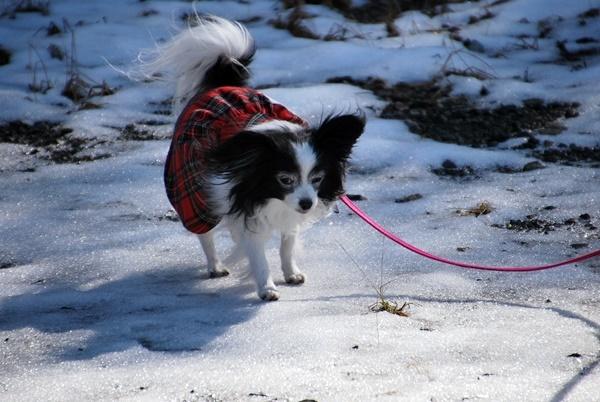 雪の上をお散歩7