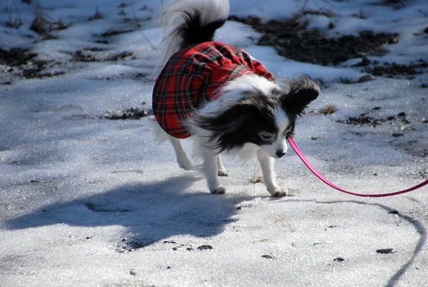 雪の上をお散歩8