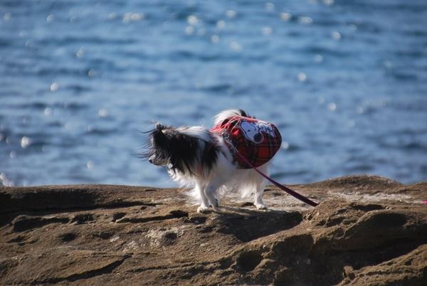 キラキラの海とルビー