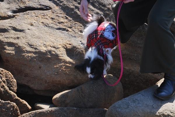 岩場を歩くルビー