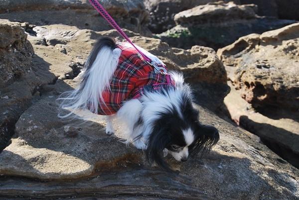 岩場を歩くルビー3