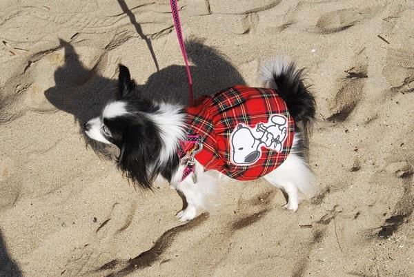 砂浜お散歩OK