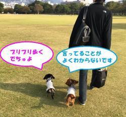 IMG_3051_convert_20161116224844.jpg