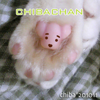 chibakuma-s.jpg