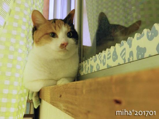 miha17-01-123.jpg