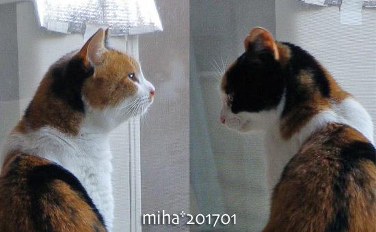miha17-01-180.jpg