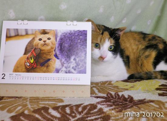 miha17-02-12s.jpg