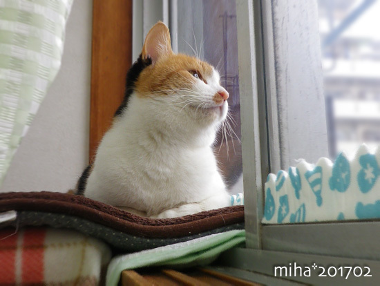 miha17-02-40.jpg