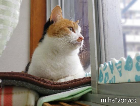 miha17-02-42.jpg